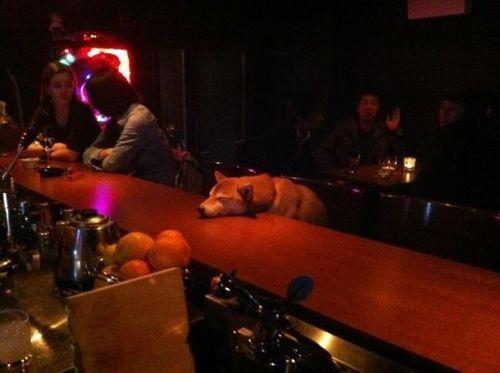 dog, bar, wtf