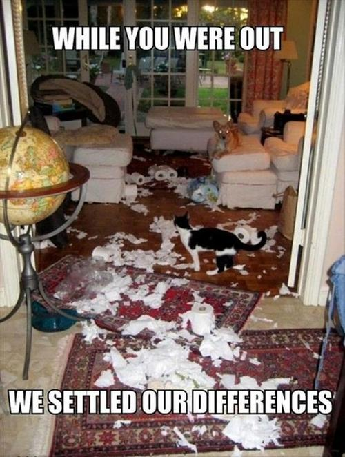 while you were out we settled our differneces, cat and dog fight strews toilet paper all over living room, destruction, meme