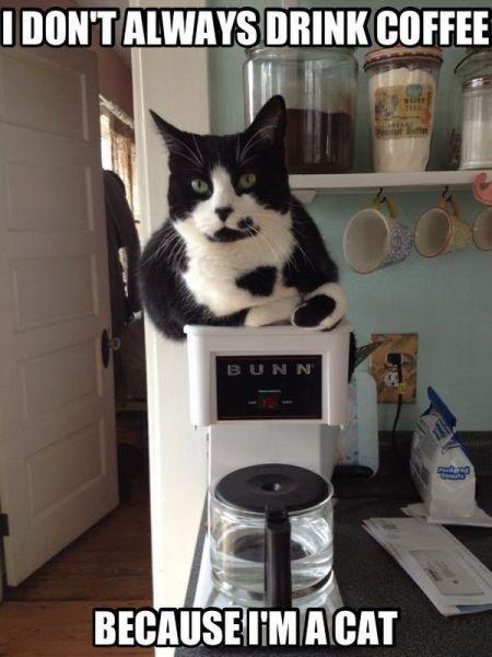 cat, coffee, meme, most interesting cat