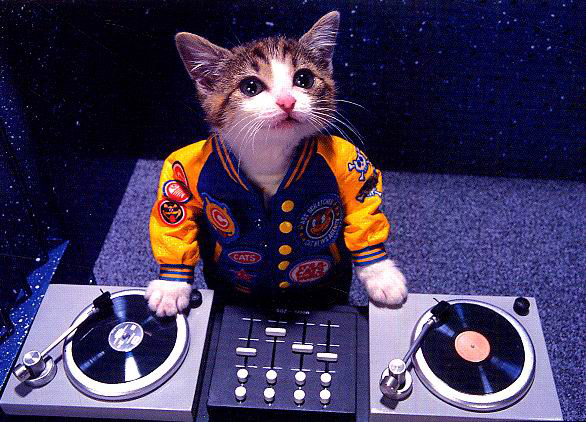 cat, dj, cute, mixer, vinyl, turntables
