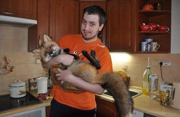 guy holding a happy fox