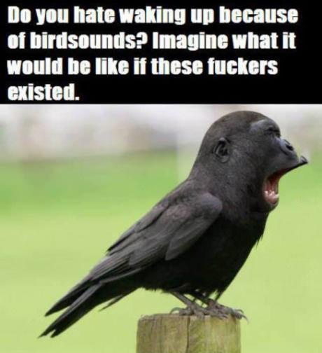 bird, monkey, annoying, wtf