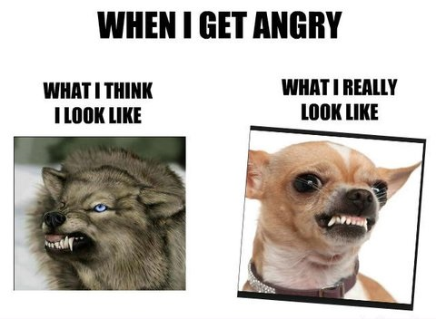 expectation, reality, angry, dog, face