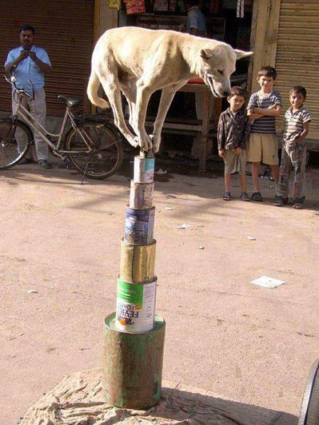 dog, balance, win, india, cans