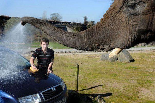 elephant, car wash, trunk, spray
