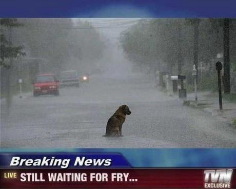 fry, dog, rain, news, sad, futurama