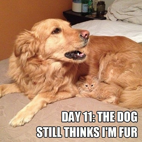 cat, dog, fur, meme, camouflage