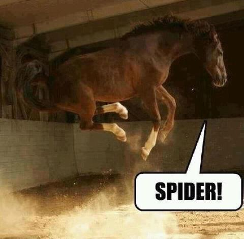 horse, spider, freak out
