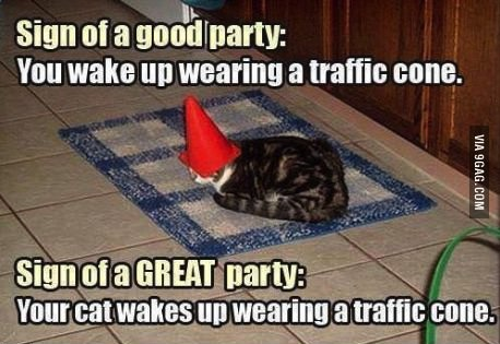 cat, traffic cone, party, signs