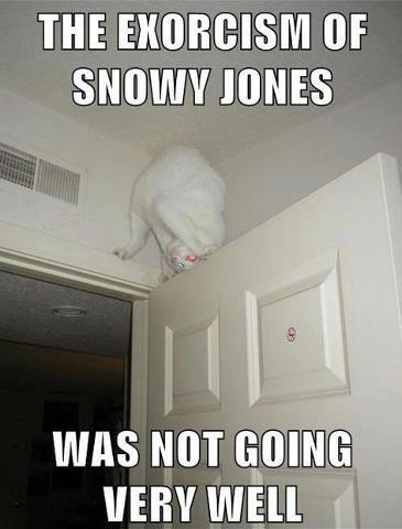 the exorcism os snowy jones was not going very well, cat on door, meme, creepy