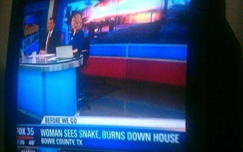 news, snake, house, fire, wtf, over reaction