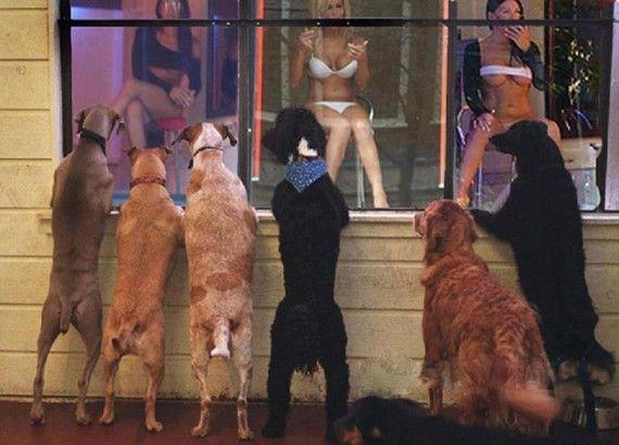 dogs, woman, underwear, window