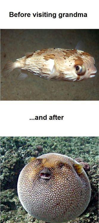 grand parents, food, fat, eat, blow fish