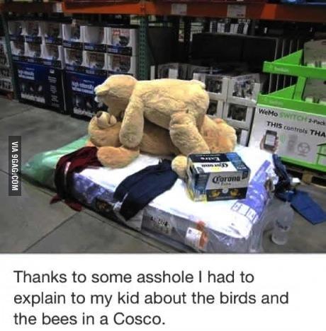 costco, bears, sex, lol