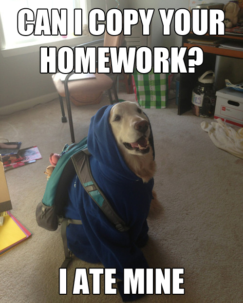 dog, homework, ate, meme