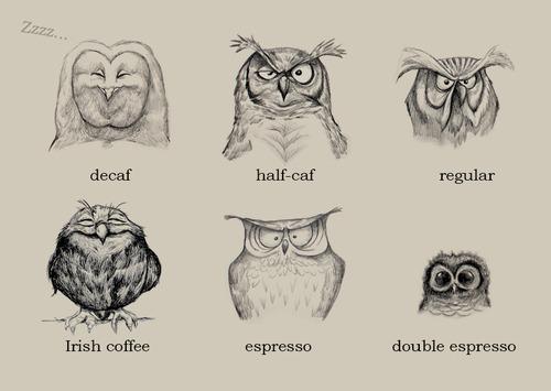 coffee, owls, caffeine