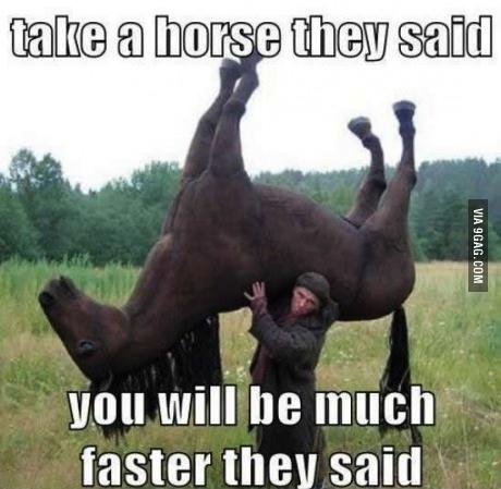 horse, wtf, take, meme