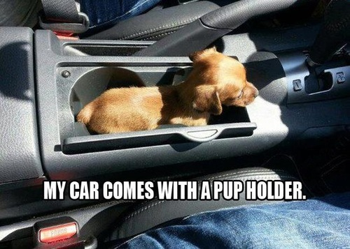 dog, puppy, car, holder, pun