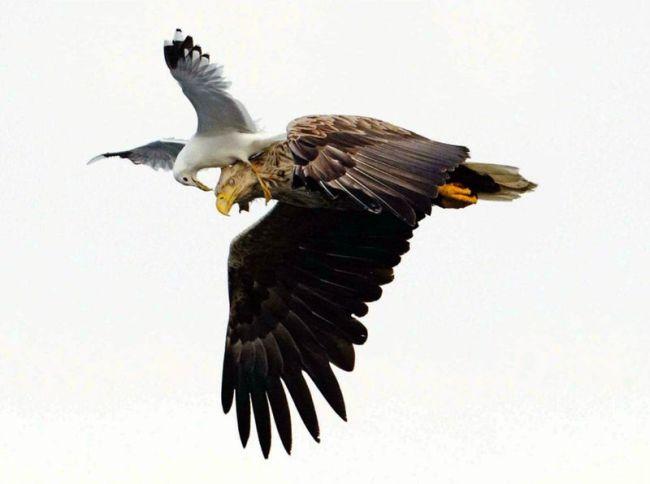 seagull, eagle, wtf, birds
