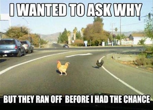 meme, chicken, crossing road