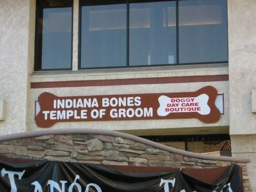 Indiana bones, Temple of Groom, pet store name, wordplay, indiana jones