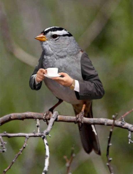 bird, coffee, photoshop