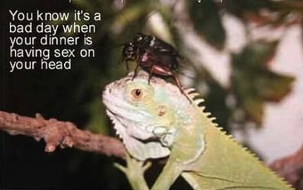meme, lizard, insects, sex, head, bad day