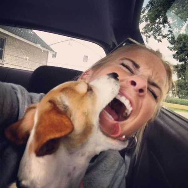 dog, bite, face, wtf