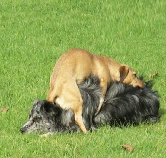 dog, hump, fail