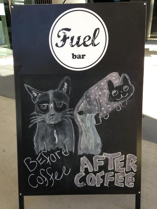 coffee, chalkboard, grumpy cat, nyan cat, before, after