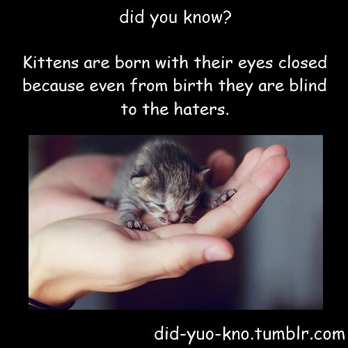 haters, kittens, eyes closed, blind
