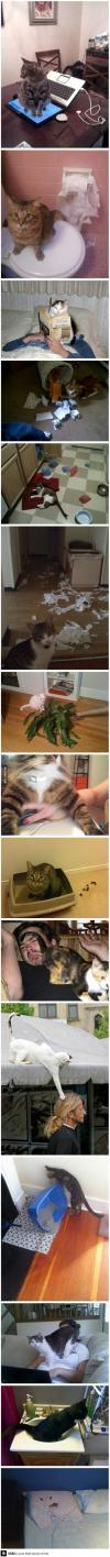 just cats being assholes, compilation, troll