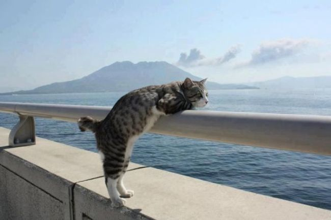 cat, look out, water, scenery