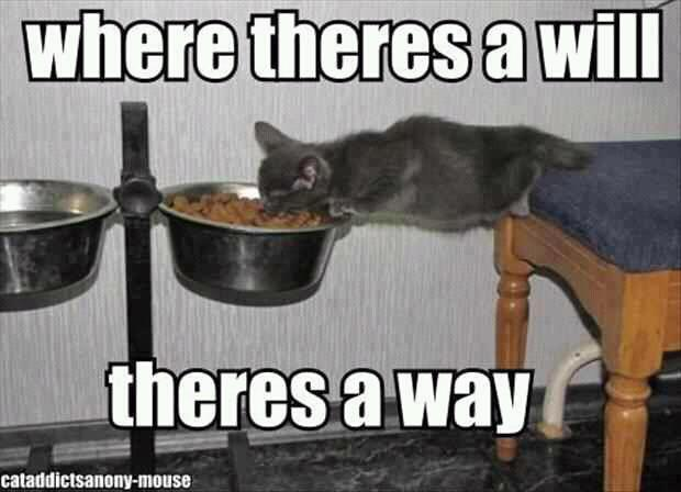 cat, food, eat, meme, will, way