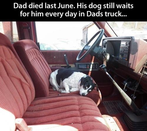 dog, story, truck, man