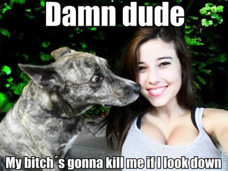 meme, girl, cleavage, dog