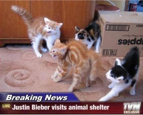 justin bieber visits animal shelter, breaking news, pissed off kittens, cats