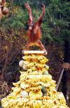 monkey, banana, pile, wtf