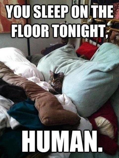 cat, meme, bed, floor, sleep
