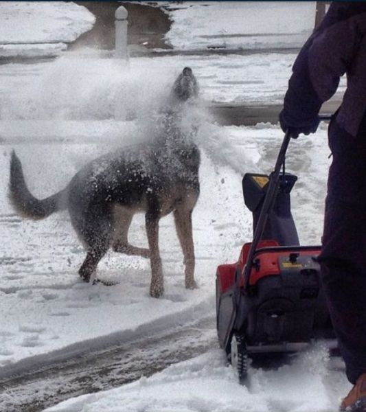 dog, snow, eat, blower