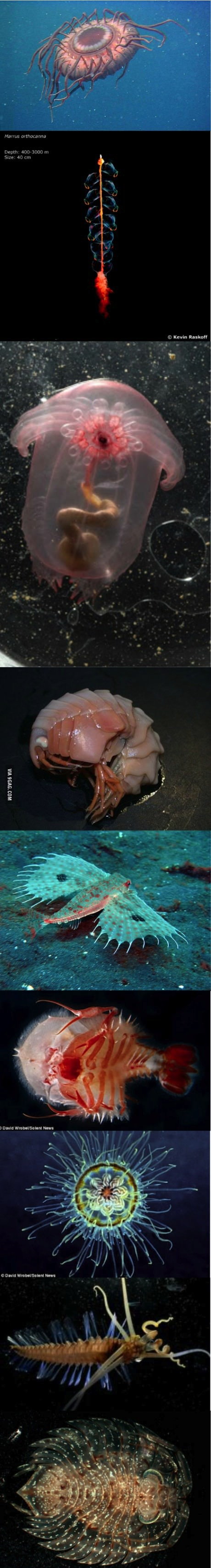 deep sea creatures, compilation, cool, fish, shellfish