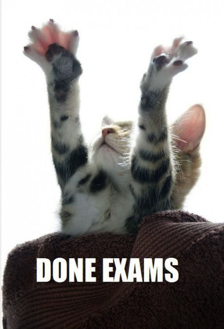 cat, meme, done exams, relief