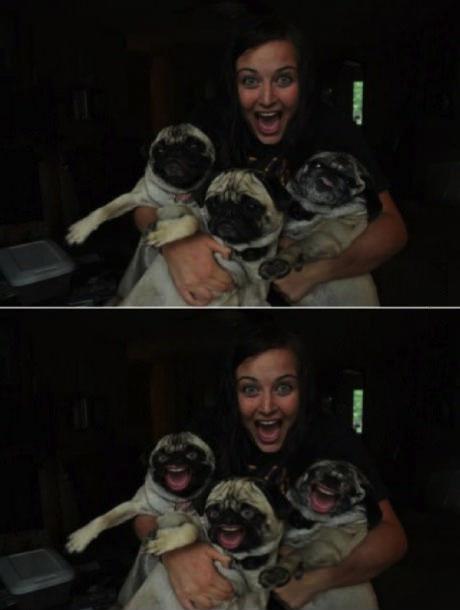 dog, woman, photoshop, face swap