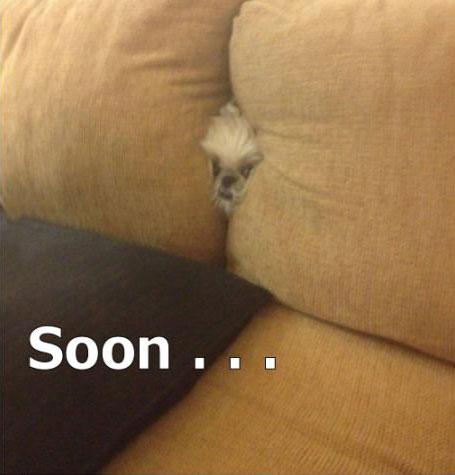 dog, sofa, meme, soon
