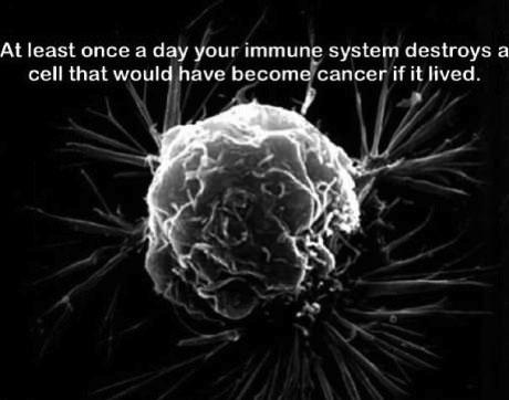 cancer, immune system, dyk, cells, health