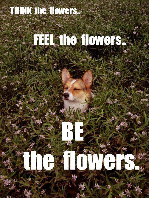 dog, flowers, feel, think, be