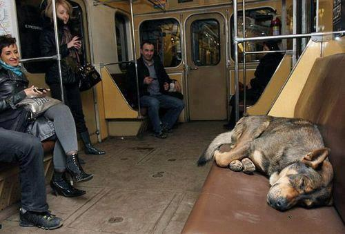 dog, story, russia
