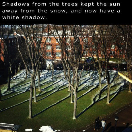 trees, shadows, snow, white, story, cool, nature