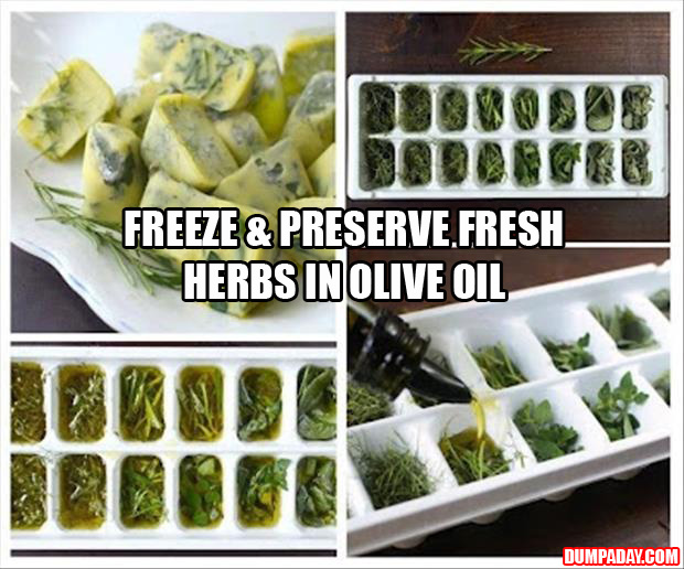freeze and preserve fresh herbs in olive oil, life hack, food tips
