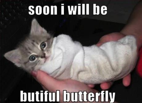 soon I will be beautiful butterfly, meme